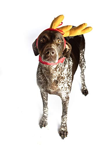 Grinch Dog Costume (ComfyCamper Grinch Max The Dog Costume, Max Antler for Dogs Headband for Small, Medium and Large Dogs and Pets for Halloween and Xmas)