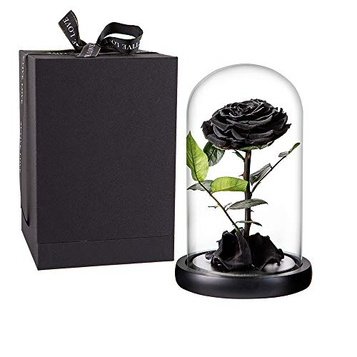 High-quality Romantic Blue Black Rose Gift for Lovers Bonsai Plant FREE SHIPPING