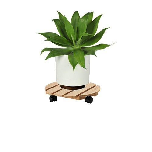 Galleria Bamboo - 6