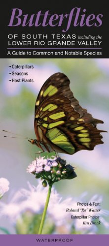 Butterflies of South Texas incl. the Lower Rio Grande Valley: A Guide to Common & Notable Species (Quick Reference Guides)