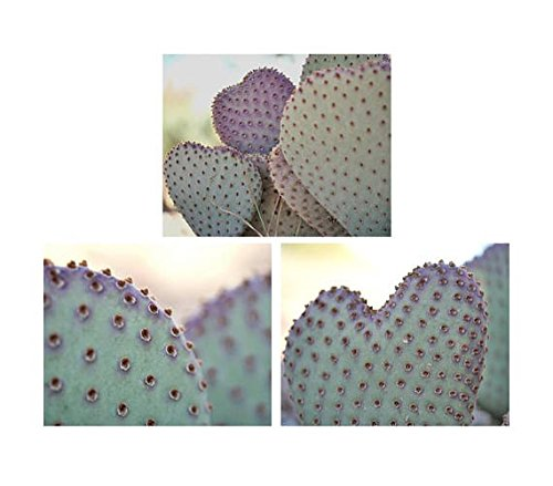 Cactus Print Set, Cactus Cacti Set of 3 Prints, Southwest Shabby Chic Wall Art Decor, Purple Aqua Baby Girl Room Bedroom Nursery Decor Wall Art Pictures