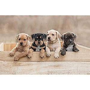 Lantern Press American Staffordshire Terrier Puppies Sitting in a Box A-9004406 (15oz White Ceramic Mug) 1