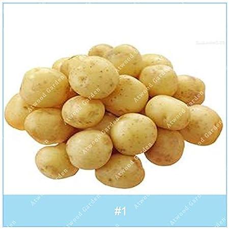Kalash Nuevos 100pcs Semillas de patatas de siembra de hortalizas para la crema