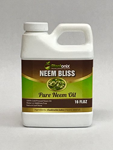 Neem Bliss 100% Pure Cold Pressed Neem Seed Oil - (16 oz)