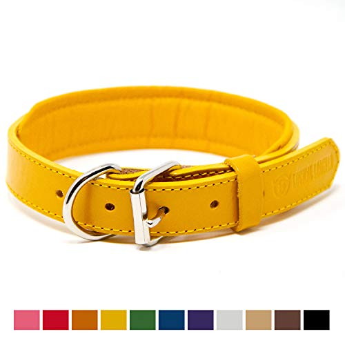 Logical Leather Padded Dog Collar - Best Full Grain Heavy Duty Genuine  Leather Collar - Yellow - Medium