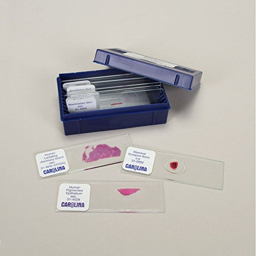 Integument Types Microscope Slide Set