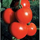 new girl tomato - New Girl ORGANIC Tomato Seeds (Solanum lycopersicum) 20+ Rare Seeds + FREE Bonus 6 Variety Seed Pack - a $29.95 Value! Packed in FROZEN SEED CAPSULES for Growing Seeds Now or Saving Seeds For Years