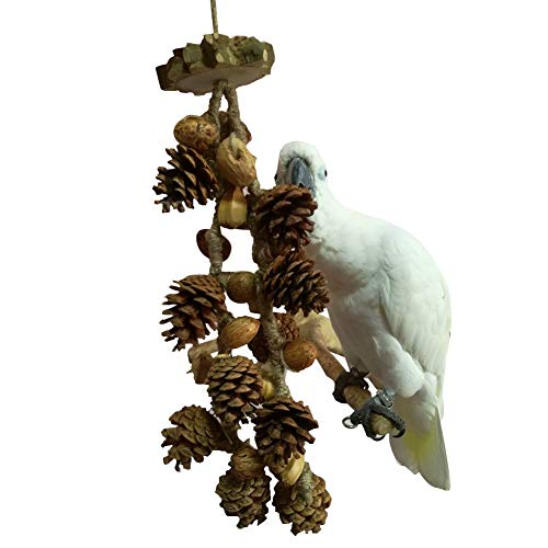 QBLEEV Bird Treats Toy, Parrot Cockatiel Chewing Pine Nuts Toys, Bird Cage Hanging Trim Toys for Conure Parakeet Small…