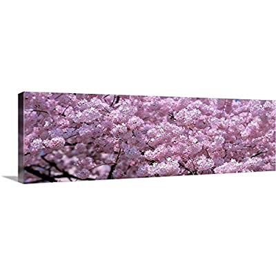 GREATBIGCANVAS Gallery-Wrapped Canvas Entitled Washington DC, Close-up of Cherry Blossoms by
