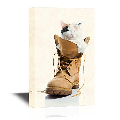 Cat Inside Climbing Boot