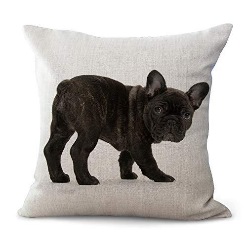 Fliyeong - Funda de cojín con diseño de bulldog francés (11 ...