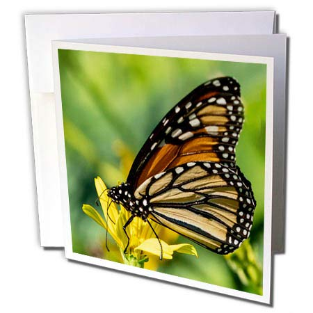 3dRose Roni Chastain Photography - Butterfly - 12 Greeting Cards with envelopes (gc_295732_2) ()