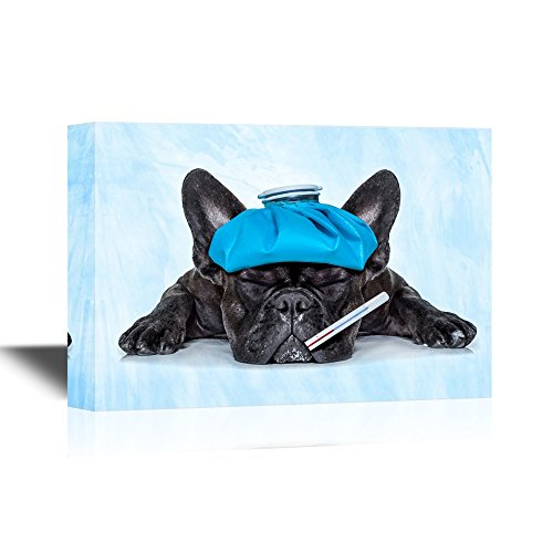 Vet A Sick Dog Pet Catching Cold
