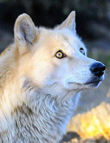 Notebook: Wolf wolves predator animal nature wildlife canine dog dogs wild animals forest snow