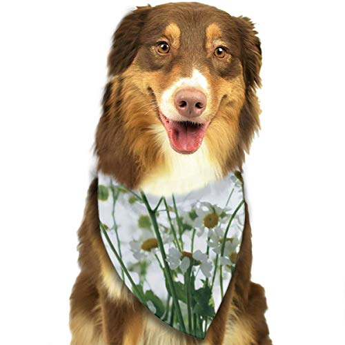 - HGFR A Beautiful Bouquet of Daisies Customized Dog Headscarf Bright Coloured Scarfs Cute Triangle Bibs Accessories for Pet Dogs
