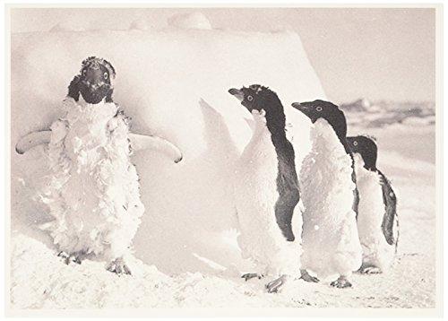 Nouveau Feet (Nouvelles Images Iced Case Adelie Penguins 2-Pack Greeting Cards)