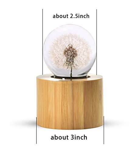 Mylifestyle Musical Box Real Specimens Dandelion Ball with Wood Base Music Box Gift for Christmas/Birthday/Valentine's Day,(Melody Happy Birthday to You) by Mylifestyle (Image #3)