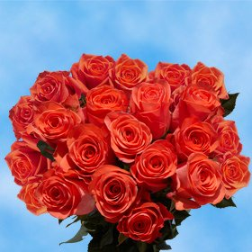 GlobalRose 2 Dozen Orange Roses - Pleasantly Terrific!