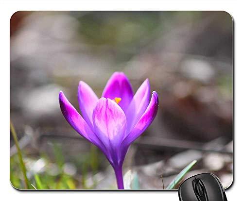 Mouse Pad - Flower Saffron Nature Bloom Blossom Plant ()