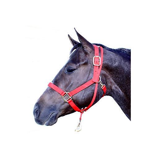 - Aime Imports Basic Pull Back Training Halter Black