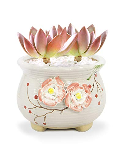 (Dahlia Hand Carved Ceramic Succulent Planter/Plant Pot/Flower Pot/Bonsai Pot, Two Pink Roses #9)
