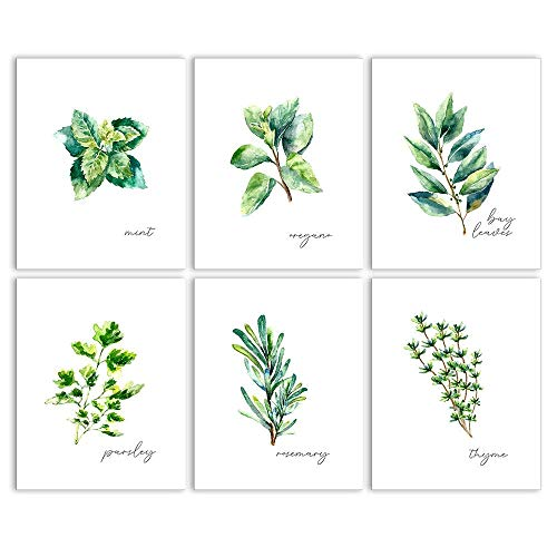 Kitchen Herbs Art Prints - Botanical Prints - Set of 6 Unframed 8x10 - Framed Photo Mint