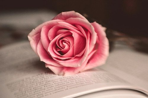 Pink Rose in Book Art Print on Canvas,Wall Decor Poster 24x3