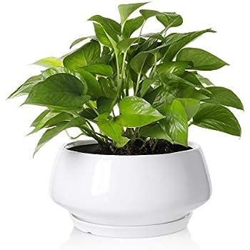 Amazon Com Greenaholics Large Plant Pot 8 8inch Round