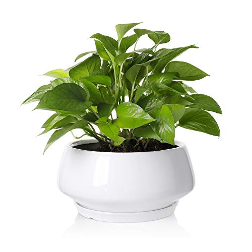 Greenaholics Large Plant Pot - 8.8Inch Round Ceramic Planter with Saucer for Scindapsus Aureum and Ivy Vine, with Drainage Hole, - White Large Ceramic