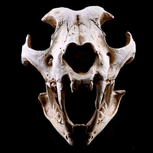 TOPmountain Resina Cane Canino Cranio Testa Simulazione Modello di Esposizione con Resina di Alta precisione Oggetti Decorativi in Teschio Teschio Teschio Esemplare Animale