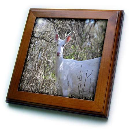 Framed Tile Deer - 3dRose Dreamscapes by Leslie - Animals - Albino Deer Watching - 8x8 Framed Tile (ft_314215_1)