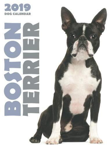 Boston Terrier 2019 Dog Calendar