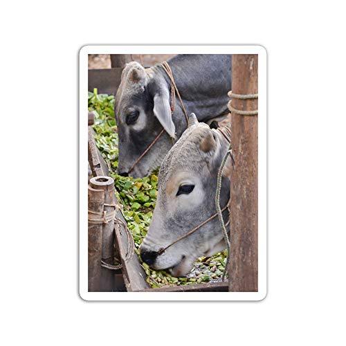 gordonstore Sticker Creature Animal Cows in The Farm Animals Fauna (3