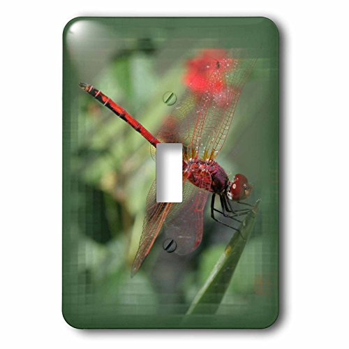 3dRose lsp_214023_1 Red Male Skimmer Or Firecracker Dragonfly with Border Single Toggle Switch, ()