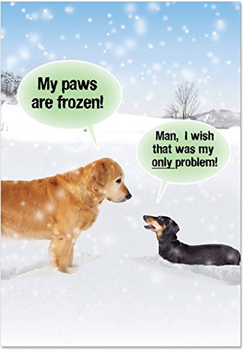Box of 12 'My Paws Are Frozen Boxed Christmas' Note Card Set with Envelopes 4.63 x 6.75 inch, Happy Holiday Cards, Funny Xmas Stationery Greeting for Golden Retriever, Dog, Animal Lover B5953