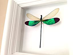 Real Dragonfly Taxidermy Art - Damselfly, Insect Art, Bug Arts, Bugs, Insects, Taxidermy, Entomologist, Butterflies