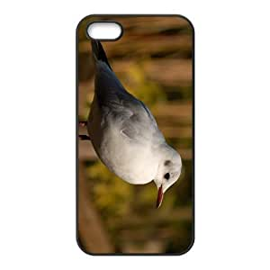 Shag Bird Hight Quality Plastic Case for Iphone 5s