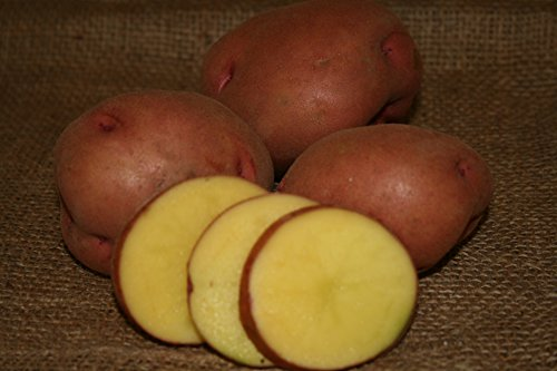 FARM DIRECT- ORGANIC SEED POTATOES- Red Gold 2 lbs.