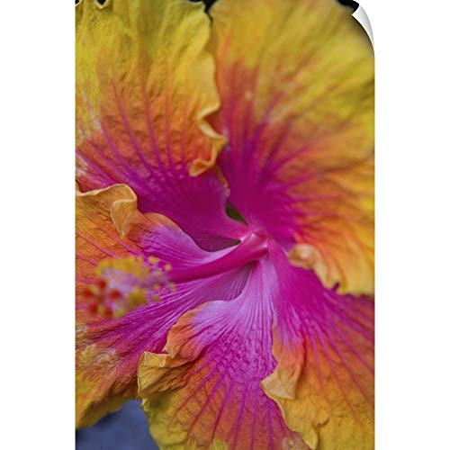 CANVAS ON DEMAND Darrell Gulin Wall Peel Wall Art Print Entitled Close-up of Hibiscus ()