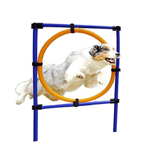 Yunt Dog Agility Training Obedience Jump Hurdle Pet Sports Equipment Training Toys Training Hoop Set Dogs High Jump Outdoor Jumping Through a Circle by Yunt