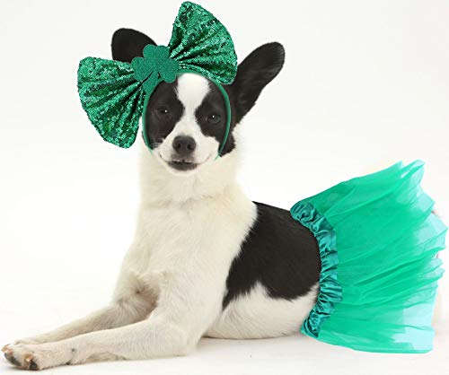 St Patricks Day Girl Dog Outfit