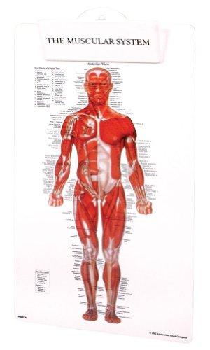 Clipboard System - Muscular System Clipboard
