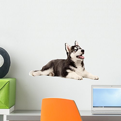 (Wallmonkeys Siberian Husky Puppy White Wall Decal Peel and Stick Graphic (18 in W x 14 in H) WM227804)