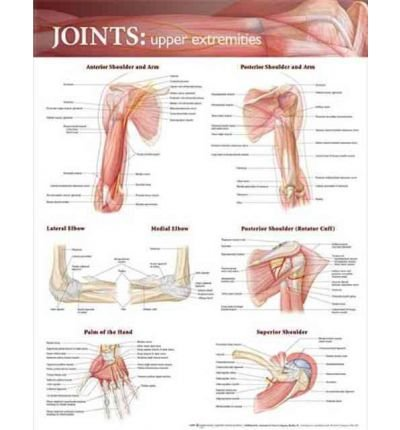 [(Joints of the Upper Extremities Anatomical Chart)] [Author: Anatomical Chart Company] published on (September, 2009)