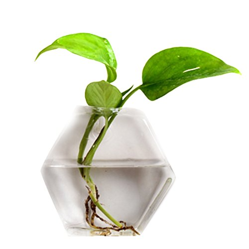 HAOUN Wall Hanging Fish Bowl, Mini Fish Tank Wall Mounted Small Aquarium for Wall Decor 6.6 Inch - Hexagon L + Traceless Hook