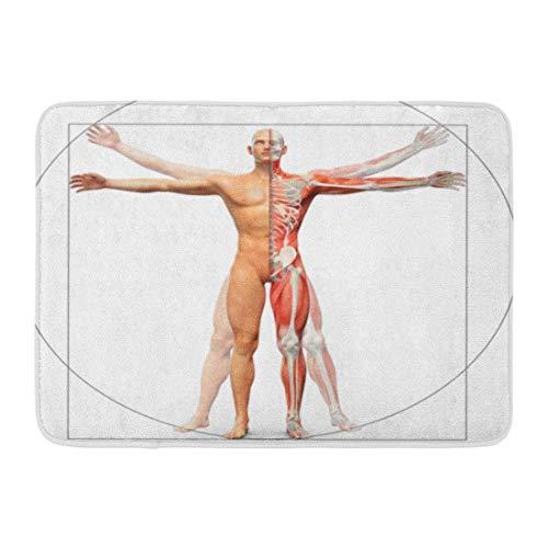 Soefipok Alfombra De Baño Hueso Músculo Anatomía Humana
