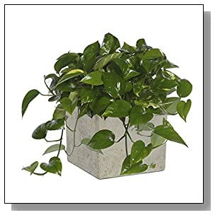 GARDENGOODZ 3/0935/1 ConSq Natural Cement Square Planter 8 inch, One Size