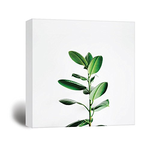 Square Tropical Plant on White Background Gallery