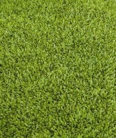 15x Rasenstaude - Cotula Squalida. Der Rasenersatz Mit Minimalem ... Begehbare Bodendecker Rasenersatz Pflanzen