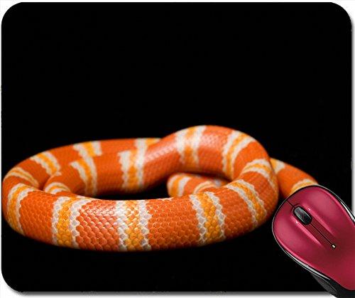 Liili Mousepad IMAGE ID: 3926948 Albino Tangerine Honduran Milk Snake Lampropeltis honduransis disis on black background (Tangerine Snake)